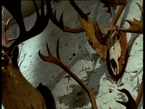 Track left past mounted heads and antlers of various deer species, USA