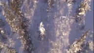Track over a snowy boreal forest. Available in HD.