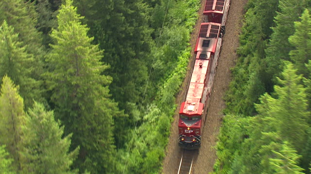 Track over a train travelling through dense forest, parallel to the Columbia River. Available in HD.