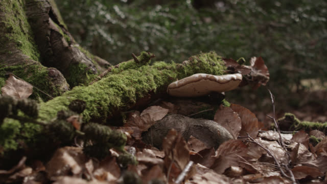 Track over dead leaves and bracket fungus on forest floor, Gloucestershire, England