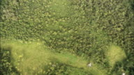 Track over deforestation in Amazon rainforest Available in HD.