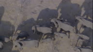 Track over elephant herd on dusty plain, Botswana Available in HD.