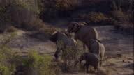 Track over elephants in vegetation, Skeleton Coast, Namibia