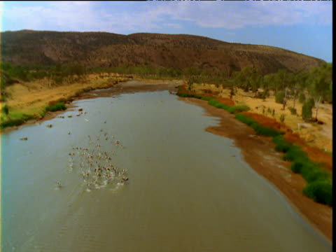 Track over flock of pelicans in drying river bed, Australia