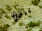 Track over herd of elephants running through savanna , Africa