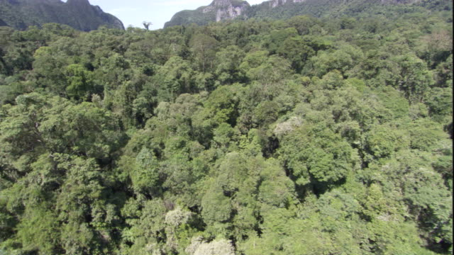 Track over rainforest, Gunung Mulu National Park. Available in HD.