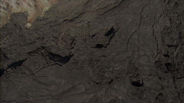 Track over solidified lava flow to scrub, Galapagos Islands Available in HD.