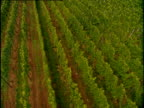 Track right over vineyard with crop growing in neat rows Rhineland
