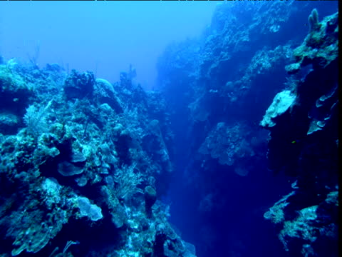 Track through narrow canyon between corals, Cayman Islands