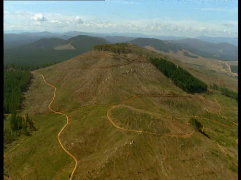 Track towards felled section of forest acting as preventative fire break, New South Wales, Australia