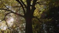 Track under beech tree (Fagus sylvatica) in Autumn sunshine, Gloucestershire, England
