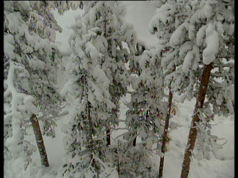 Track up snow covered conifer trees in forest lakeside town in distance