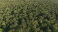 Tracking aerial over a vast deciduous forest. Available in HD.