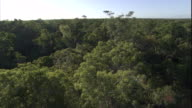Tracking over the canopy of a dense Madagascan forest. Available in HD.