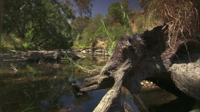 Tracking shot across a small creek in the Australian countryside.