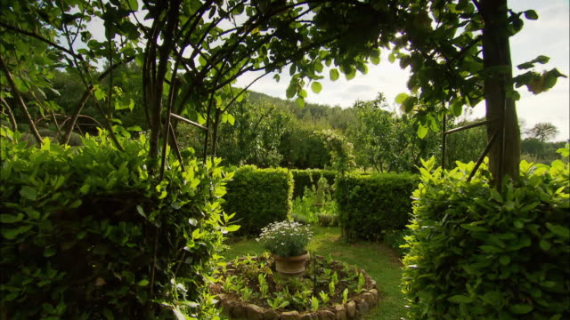 Tracking shot exploring a green flowered country garden