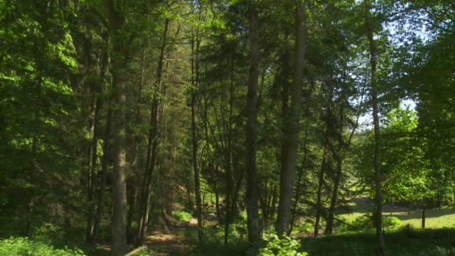 Carrellata: Foresta alla luce del sole