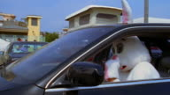 Tracking shot medium shot man in rabbit costume clowning while driving car in parking lot / Los Angeles, CA