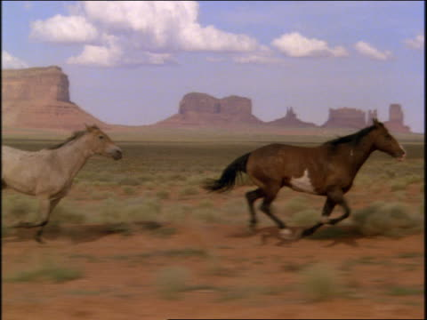 tracking shot of horses running in desert / rock formations in background