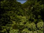 Tracking shot of lush forest landscape, Maui, Hawaii