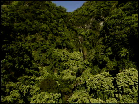 Tracking shot of lush forest landscape, Maui, Hawaii