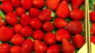 tracking shot of strawberries
