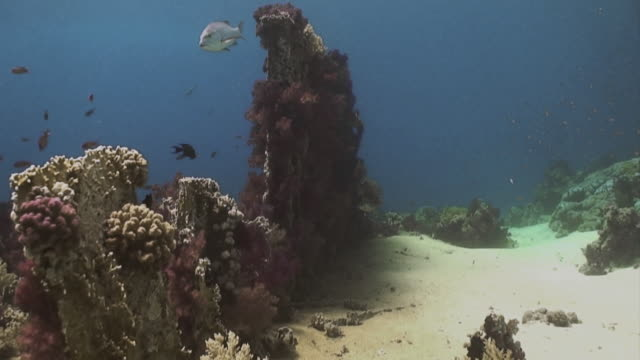 'Tracking shot through red sea, colourful coral'