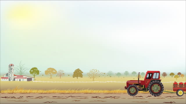 Tractor and Tomato Harvest