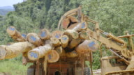 MS Tractor loading truck with felled logs / Tawau, Sabah, Malaysia