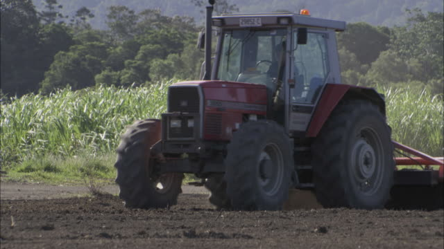A tractor plows near a cane field.