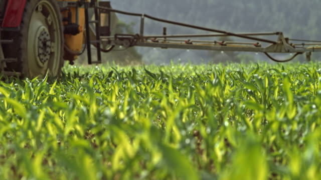 LD-Traktor mit einer Boom-Sprayer Spritzen junger Mais ernten auf dem sonnigen Feld