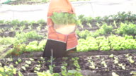 Traditional African Business Woman Organic Vegetables
