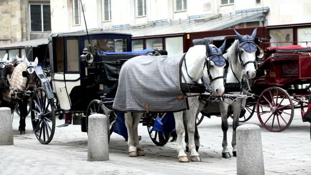 traditional horsedrawn of Vienna, Austria