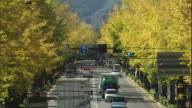 Traffic moves along Koshu Highway lines by Ginkgo trees.