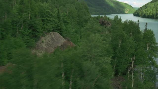 WS POV Train passing through forest