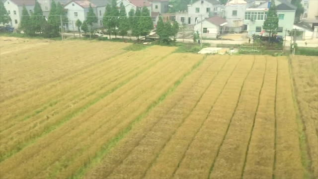 Train point view of China countryside landscape,real time.