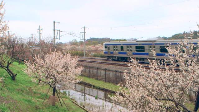 Train running along the garden border fence which separates the garden and railroad tracks Train passing by the plum trees in Ibaraki Kairakuen Garden