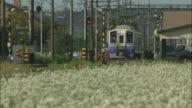 A train slowly approaches a railroad crossing near a buckwheat field.