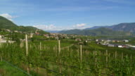 Tramin in South Tyrol and its Vineyards PAN