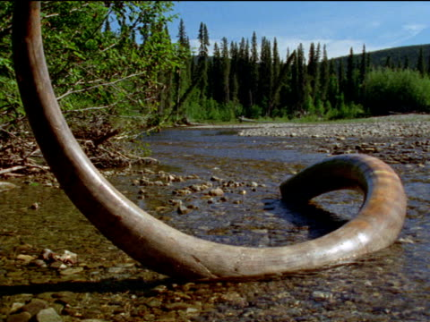 Transition from fossil tusk to living mammoths during Ice Age, North America