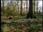 Transition from winter to spring in an English woodland.