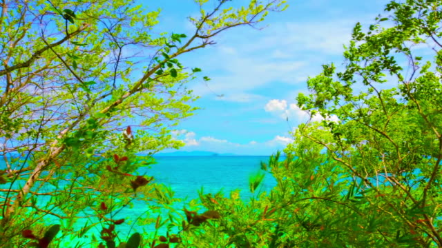 Tree and sea background