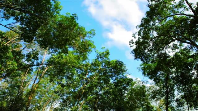Baum und Himmel Hintergrund