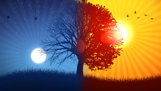 http://media.gettyimages.com/videos/tree-and-sunmoon-02-background-video-id114286876?s=640x640
