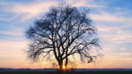 HD TIME-LAPSE: Tree At Sunset