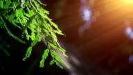 Tree branch and sunbeam