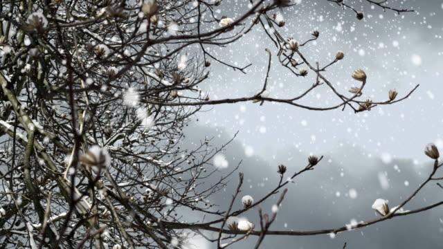 Ramo di albero in un giorno di neve