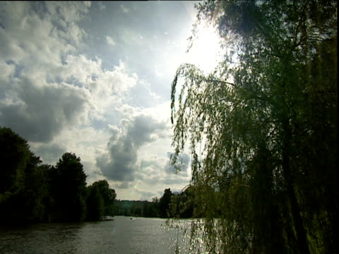 Tree branches and leaves blowing in breeze on bank of River Thames in High Wycombe Buckinghamshire