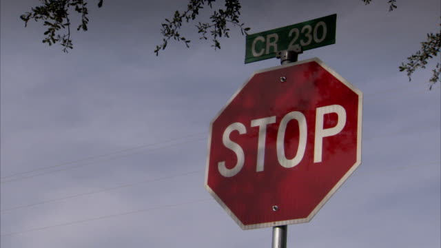 Tree branches hang over a stop sign in Texas. Available in HD.