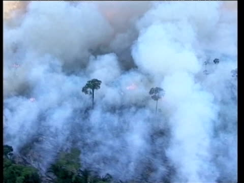 Tree burning in Amazon rainforest Aerial views of smoke and flames rising from burning rainforest during deforestation / logging process...